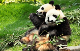 Panda Keeper and Chengdu Highlights 4 Days Tour